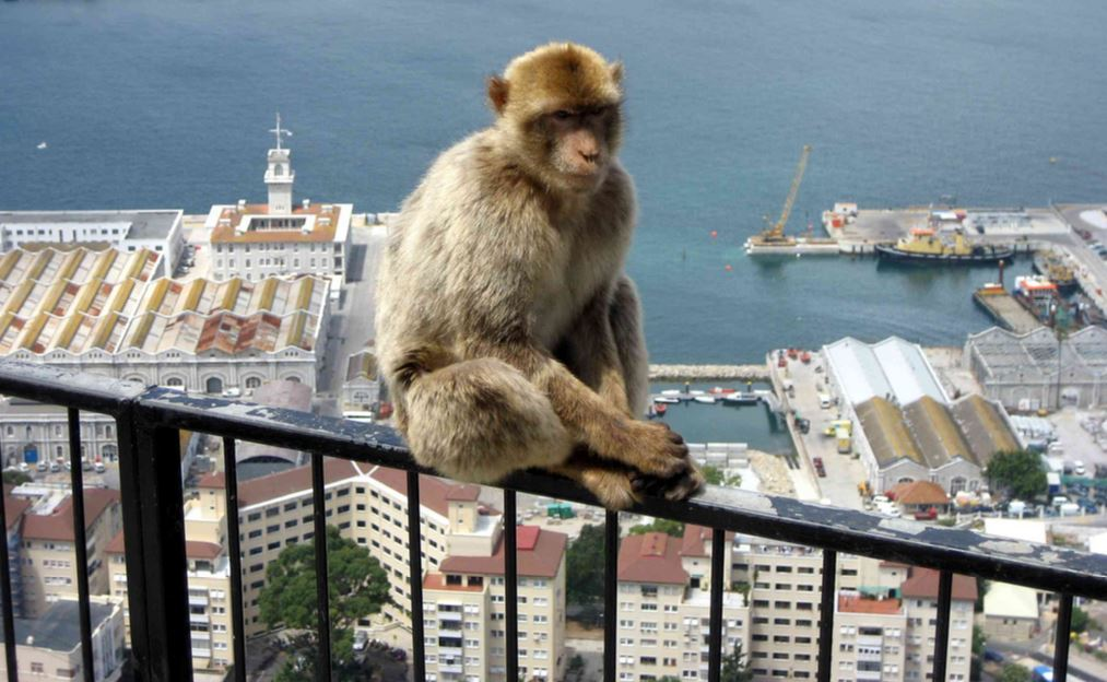 Gibraltar deserves representation in the House of Commons post-Brexit